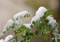 В среду в Смоленске ожидается дождь с мокрым снегом