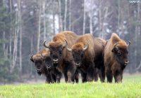 Смоленский благотворительный забег за зубров поддержал Всемирный фонд дикой природы