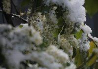 Накануне Дня Победы в Смоленск придут «черемуховы» холода