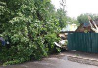 В Смоленске ураганом повалило деревья