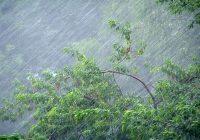 В среду в Смоленск могут вернуться грозы и порывы ветра