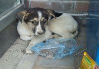 Смоленские спасатели освободили из ловушки двухмесячного щенка