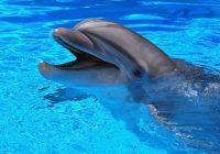 Смоляне выйдут на пикет против дельфинария 17 июня