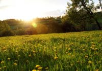 Сегодня в Смоленске будет солнечно