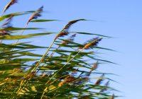 Во вторник в Смоленске будет облачно и ветрено
