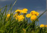 Первый день лета в Смоленске будет ветреным и дождливым