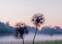 Идеи для уикенда в Смоленске и области. 1-2 июля