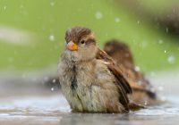 Понедельник в Смоленске будет теплым и дождливым