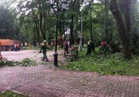Вчерашняя гроза повалила деревья в парке Блонье