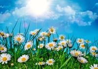 Сегодня в Смоленске будет солнечно и тепло