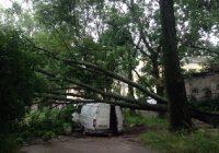 В Смоленске ветер повалил дерево на «Газель»