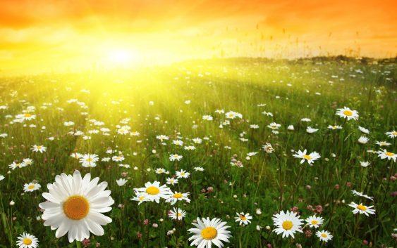 Смоленск ожидает жаркая пятница: до +30°C