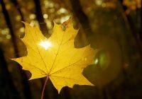 Праздничные выходные в Смоленске пройдут при комфортной погоде