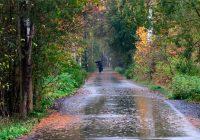 Вторник в Смоленске будет дождливым и прохладным