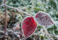 В Смоленскую область пришли первые заморозки
