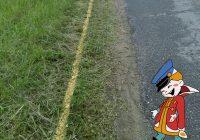 В Смоленской области начали красить траву