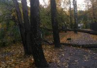 Штормовой улов Смоленска: поваленные деревья, фотографии в соцсетях и выбитые окна