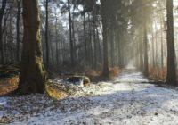 Сегодня в Смоленске ожидается первый снег