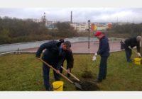 Новая ивовая аллея появилась на набережной в Смоленске