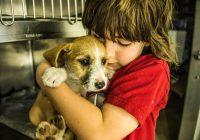 Смоленские щенки спасены из подземелья