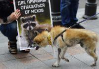 Фотовыставка против использования натурального меха открылась в Смоленском зоопарке