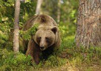 Как вязьмичу удалось выжить после встречи с медведем?
