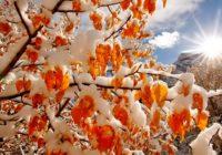 Первый снег в Смоленске выпадет в течение 10 дней