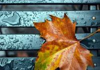 5 октября в Смоленске ожидается сильный ветер