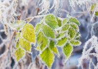 В выходные в Смоленск придут первые осенние морозы