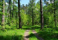 В Смоленске провели инвентаризацию леса