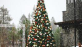Сколько стоит главная смоленская новогодняя ёлка?