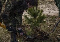 В Соловьиной роще высадили 50 саженцев сосен