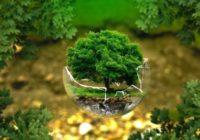 В каком состоянии находится экология Смоленска