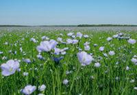 В Смоленской области запланировано строительство крупного льнокомбината