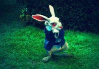 Готовы ли смоляне довериться белому кролику