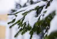 Зима на Смоленщине берёт бразды правления в свои руки