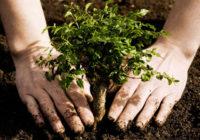 В Смоленской области высадили более 8 миллионов деревьев