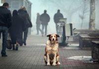 Смоленских собак будут стерилизовать в специальном питомнике