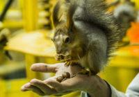 Диалоги о животных смоленского ручного зоопарка