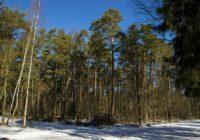 В Смоленскую область пришли мороз и гололёд