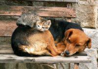 При пожаре в приюте для животных «Сириус» погиб пёс