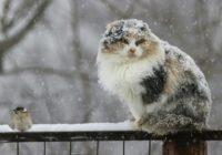 Какая погода будет в Смоленске на этих выходных