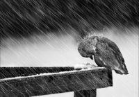В Смоленске снег смоет зимним дождем