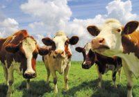 В Смоленской области модернизируют животноводческое предприятие «Шуйское»