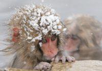 В Смоленск вновь пришли морозы