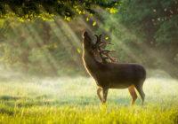 В Смоленской области посчитали лесных обитателей