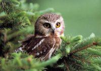 Найденной в Смоленске сове становится хуже