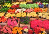 Смоленщина попала в пятерку лидеров России по экспорту цветов