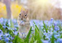 Синоптики рассказали, когда смолянам ждать прихода настоящей весны