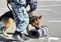 На улице Урицкого эвакуировали «Жилищник» в связи с подозрением на возможность теракта